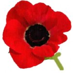 Record Revenues From Memorial Day Poppy Distribution