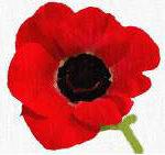 Veterans Day Buddy Poppies