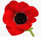 Memorial Day Buddy Poppy Distribution
